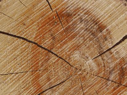 Duni Papier Tischsets 30x40cm Wood - 4x250 Stück